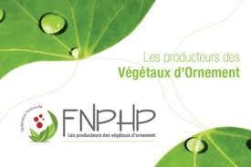 FNPHP